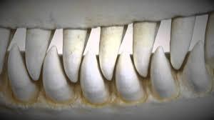sharp teeth. sharp teeth p