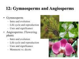 Angiosperm Vs Gymnosperm Venn Diagram Gymnosperms Angiosperms