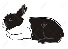 Stock Photo Disegni Di Animali Conigli Bianchi Disegno Coniglio