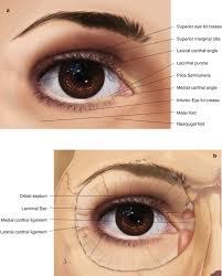 Eyelid Anatomy Eyelid Anatomy Springerlink