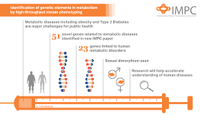 new diabetes genes discovered in latest impc research impc scientists have identified a network of genes that could play an important role in the development of metabolic diseases such as diabetes a research team