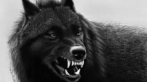 Angry Black Wolf Wallpapers 4K - Wolf ...