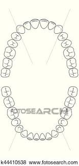 Teeth Chart Tooth Clip Art K44410538 Fotosearch