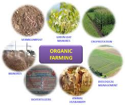 organic farming basic steps of organic farming need of organic farming