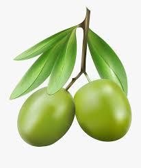 Olive Oak Size Chart Clip Art Olives Png Green Olive Clip Art 436440 Free