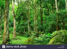 jungle background. Simple Jungle Jungle  Stock Image To Jungle Background C