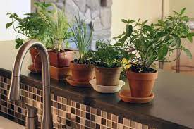 organic herbs are a smart choice for