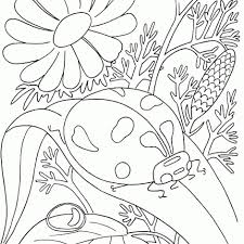 Small Picture Bug coloring pages ladybugs on leaves ColoringStar