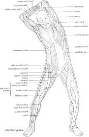 Human Anatomy Coloring Pages Human Body Coloring Pages Anatomy