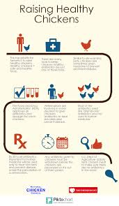 Chicken Disease Chart Questions And Answers About Antibiotics In Chicken Production