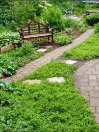 gardening groundcovers plants transplanting lawn and garden lawn care landscaping low maintenance ci stepables lysimachia nummularia creeping jenny v