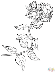 Small Picture Winter Jasmine Oasminum Multiflorum coloring page Free
