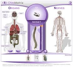 Chiropractic Body Chart Chiropractic Websites And Marketing Services Chiromatrix