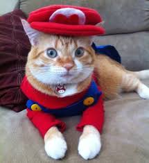 cute kittens in costumes. Perfect Kittens Kittens Images Kittens In Costume HD Wallpaper And Background Photos With Cute In Costumes U