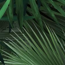 Kek Amsterdam Behang Tropisch Palmbladeren Groen Vliespapier 97