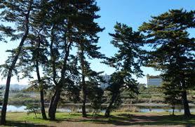 「多摩川五本松公園」の画像検索結果