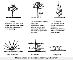 The Art Of Espalier Will Help You Train A Tree  MNN  Mother Planting A Fruit Tree
