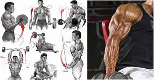 the 6 best bicep and tricep exercises
