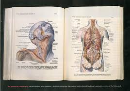American Frohse Anatomical Charts Key The Morbid History Of The Nazis Banned Anatomy Book Gq