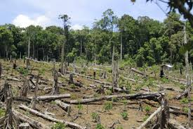 central highlands residents cut down forests to get land for