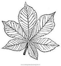Disegno Ippocastano Categoria Natura Da Colorare