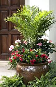 patio pots ideas plants in unique best flower and containers images decorative outdoor palm patios on indoor for full sun container shade p