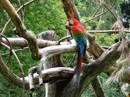 """Результат пошуку зображень за запитом """"попугай на дереве в англии"""""""