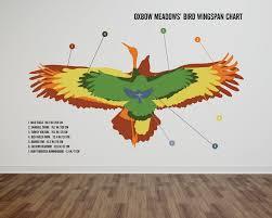 Oxbow Meadows Bird Wingspan Chart On Behance