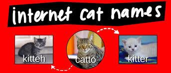 Catto Memes Video Diagram Lucidchart Blog