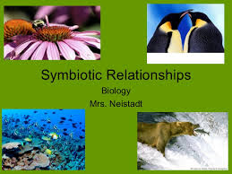 symbiotic relationships ecology symbiotic relationships