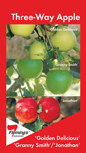 APPLE TRIPLE  Bramleyu0027s Seedling Belle De Boskoop U0026 PeasgoodTriple Grafted Fruit Trees