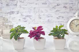 artificial cactus flowers plants in pot home decor garden green