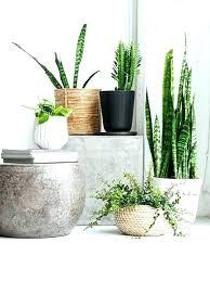 indoor tree pots decoration best concrete plant ideas on regarding for home depot pot feet deco home depot large flower pots