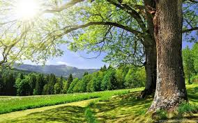 most beautiful green nature wallpapers in the world. And Most Beautiful Green Nature Wallpapers In The World