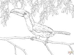 Small Picture Realistic Keel Billed Toucan coloring page Free Printable
