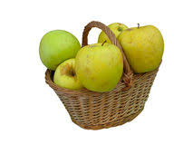 green and red apples in basket. fresh green apples in wicker basket isolated royalty free stock photo and red