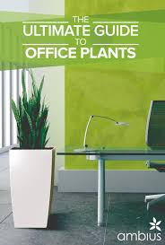plants for windowless office. ultimate guide to office plants for windowless