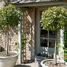green trellis surrounding green front door flanked by clipped bay trees