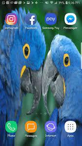 Love Birds Beautiful HDWallpaper Mobile ...