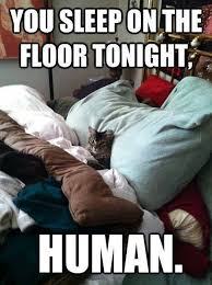 Animal Memes - You sleep on floor - Funny Memes via Relatably.com