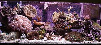 Image result for aquarium water change frequency