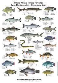 Freshwater Fish Chart Freshwater Fish Poster