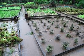 Small Picture Vegetable Garden Design Home design and Decorating