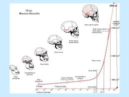 Human Evolution Timeline Chart Evolutionmodel And Friends Ygraph Com