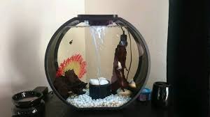 Image result for fun part of having a fish tank
