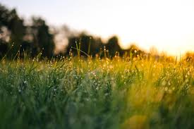 Grass…. Here today gone tomorrow ...