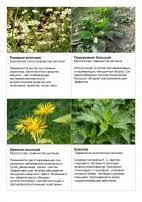 Лекарственные растения травы Зеленая аптека фитотерапия  Лекарственные растения травы Зеленая аптека фитотерапия Лекарства Конспект НОД по экологии в старшей группе Лекарственные растения Адыгеи
