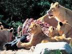 zoo billund skanderborg arts cinema
