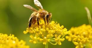 Il 20 maggio è la Giornata mondiale delle api - La Nuova Ecologia