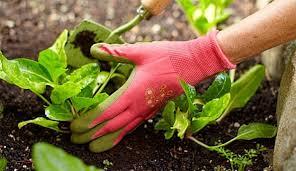 best garden gloves. Cotton Garden Gloves   Season Tips Best For Your Green Fingers S